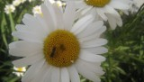 iz prirode-cvijeće, krave,lavanda 032