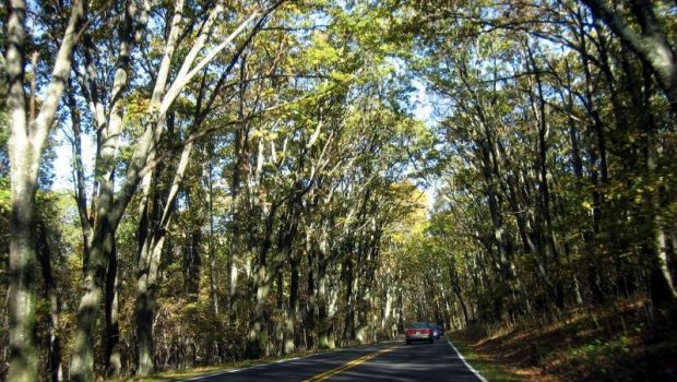 1290-driving-through-shenandoah-national-park