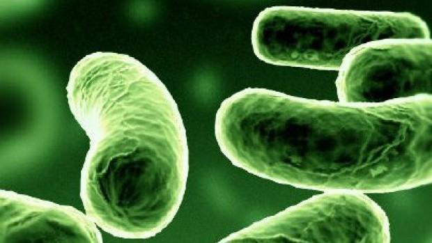 bacteria probiotics prebiotics