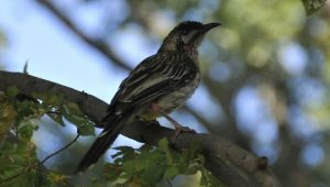 bird-on-tree_w725_h567