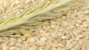 pearled-barley-600x420