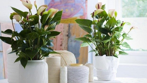 beautiful-plant-for-your-room