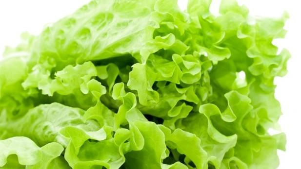 3922green_lettuce