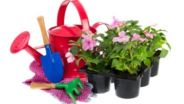 Tray Busy Lizzie plants with gardening equipment