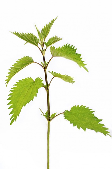 plant-164571_640