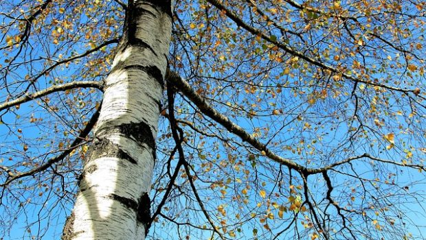 tree-2900267_640