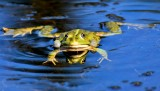 frog-3509388_1920