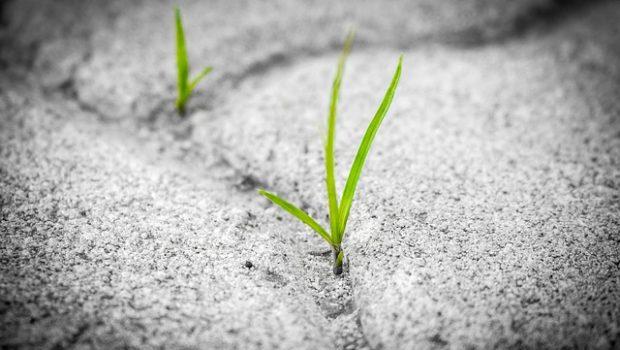 grass-1913167_640