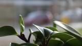 plants-1150014_640