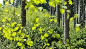 forest-2249378_640