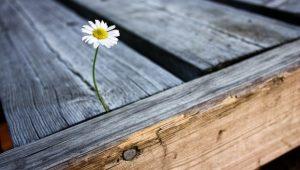 flower-2438754_640