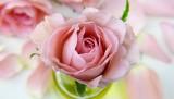 flower-3086563_640