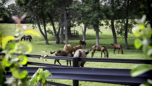 horse-2767071_640