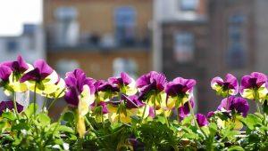 flower-3313926_640