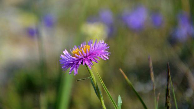 flower-2794872_1920